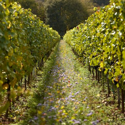 book your vineyard tour here